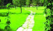 Газоны,  озеленение,  ландшафтный дизайн. — Посев газонов (Спорт,  Master