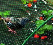 Защитная сетка от птиц